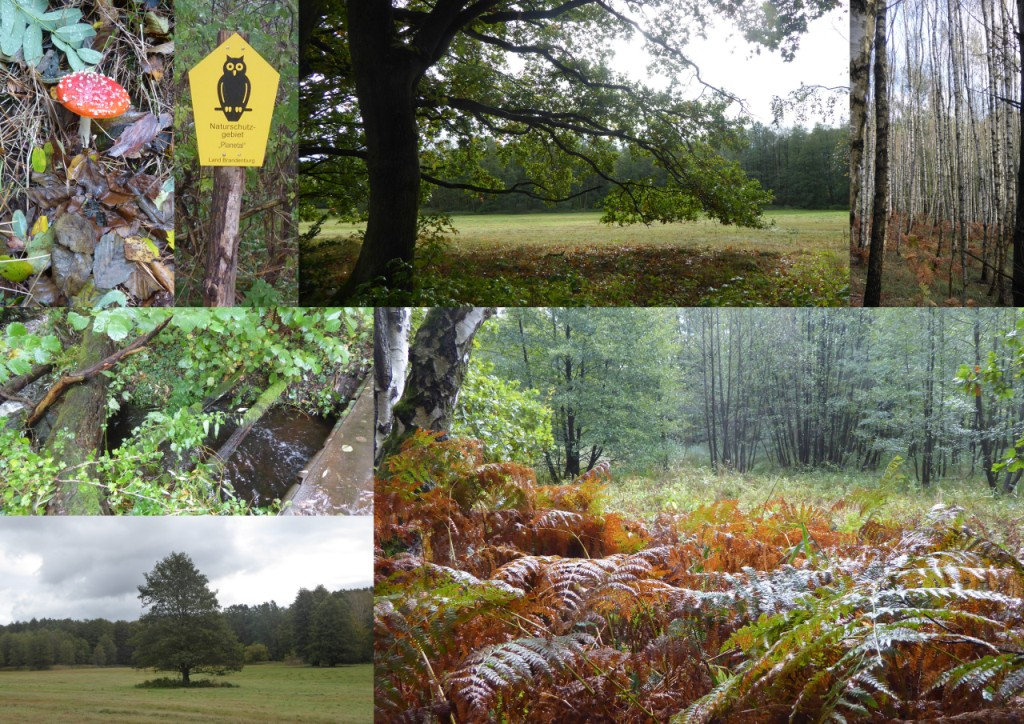 Collage_Naturpark